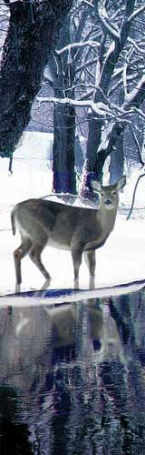 deer-pymatuning-winter-160
